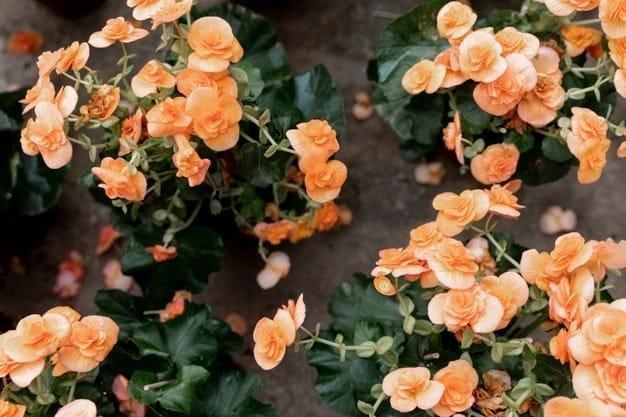 fleuriste-ixelles